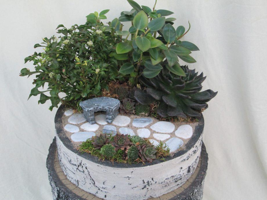 Mini Birch Garden 10inch