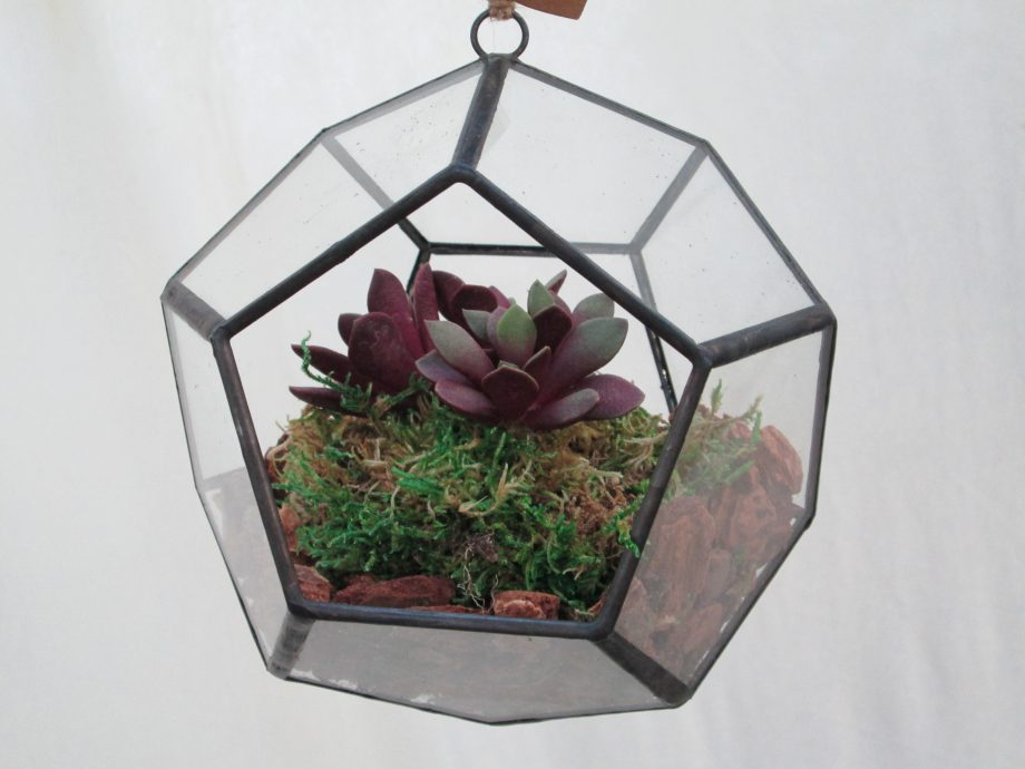 Dodecahedron 6inch w/succulants